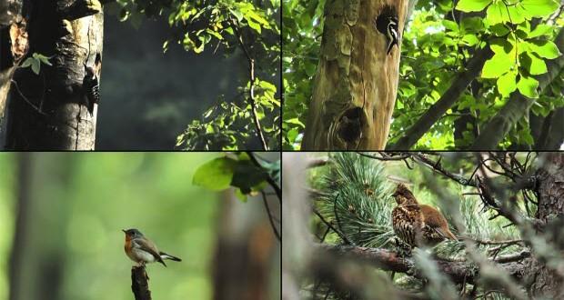 Финансират бизнес инициативи в подкрепа на биоразнообразието и защитените територии
